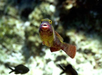 Prendere sul serio gli interessi dei pesci. Appello